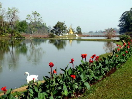 Roses and pagodas