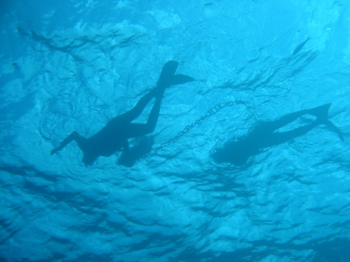 Divers silhouetted in the water.